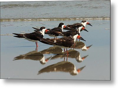 Skimmers With Reflection Metal Print