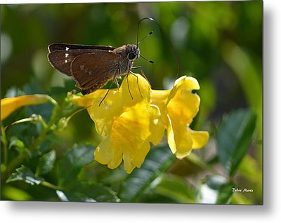 Metal Print featuring the photograph Skipper Butterfly 2 by Debra Martz