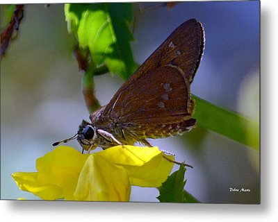 Metal Print featuring the photograph Skipper Butterfly by Debra Martz