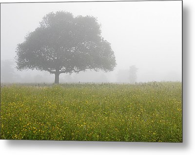 Metal Print featuring the photograph Skc 0056 Tree In Fog by Sunil Kapadia