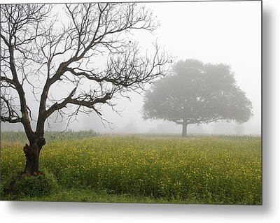 Metal Print featuring the photograph Skc 0058 Contrasty Trees by Sunil Kapadia