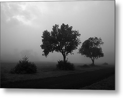 Metal Print featuring the photograph Skc 0074 A Family Of Trees by Sunil Kapadia