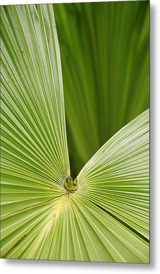 Skc 0691 The Paths Of Palm Meeting At A Point Metal Print by Sunil Kapadia