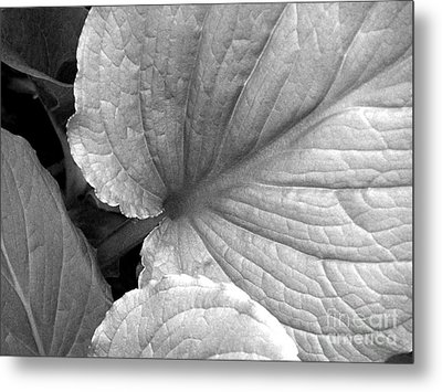 Skunk Cabbage Metal Print