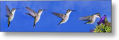 Sky Blue Flyers Collage Metal Print