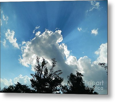Metal Print featuring the photograph Sky Phenomenon At Hains Point by Emmy Marie Vickers