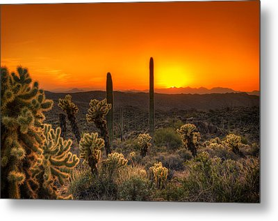 Skyfire Cholla Metal Print by Anthony Citro