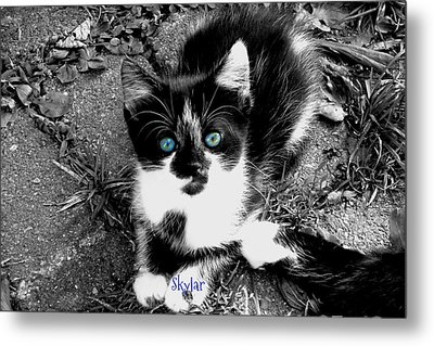 Metal Print featuring the photograph Skylar Aka Dottie by Cynthia Lassiter
