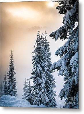 Skyline Lake Forest - January Metal Print by Inge Johnsson