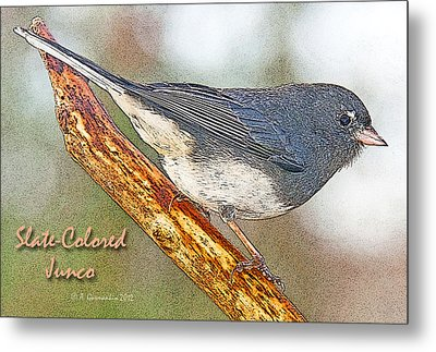 Metal Print featuring the photograph Slate-colored Junco Poster Image by A Gurmankin