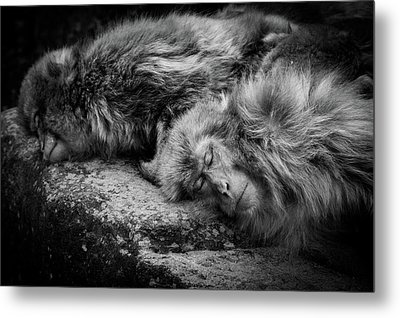Sleeping Metal Print