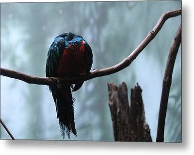Sleeping Blue Bird Metal Print