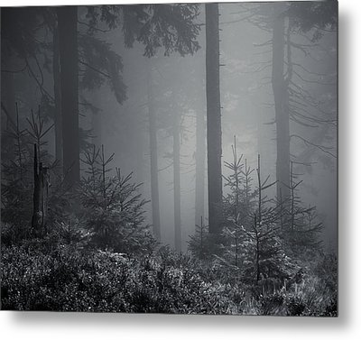 Sleeping Forest   Metal Print by Jaromir Hron