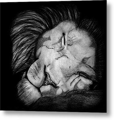 Sleeping Lion Metal Print by Saki Art