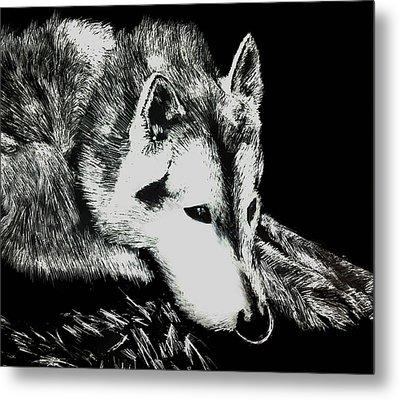 Sleeping Wolf Metal Print by Shabnam Nassir