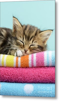 Sleepy Kitten Metal Print by Greg Cuddiford