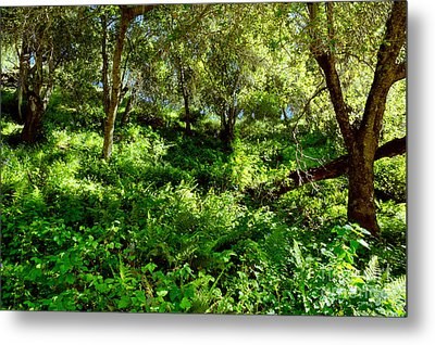 Metal Print featuring the photograph Sleepy Valley Oaks by Gary Brandes
