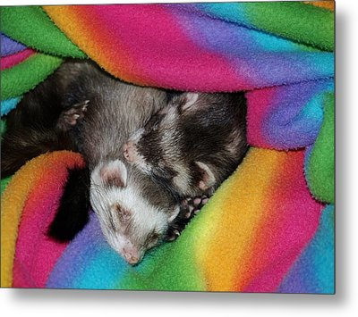 Sleepy Weezles Metal Print