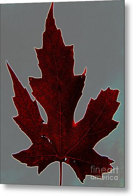Slender And Pretty Metal Print by Tina M Wenger