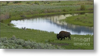 Slough Creek   #4111 Metal Print