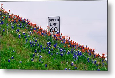 Slow Down And Smell The Bluebonnets Metal Print