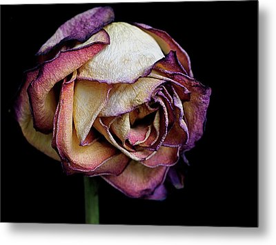 Slow Fade Metal Print by Rona Black