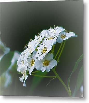 Small Beauty Metal Print