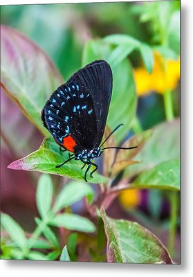 Small Black With Blue Spots Metal Print by Karen Stephenson