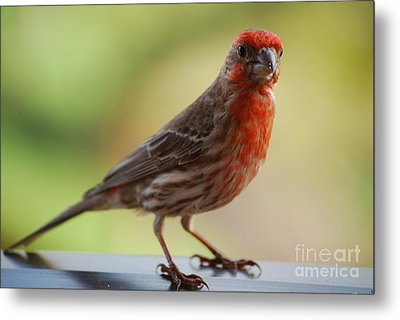 Small Brown And Red Bird Metal Print by DejaVu Designs