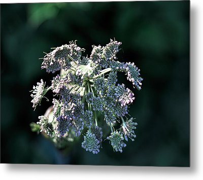 Metal Print featuring the photograph Small Flowers Makes One Big by Leif Sohlman