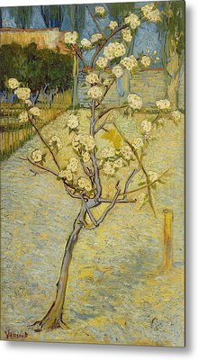 Small Pear Tree In Blossom Metal Print by Vincent van Gogh
