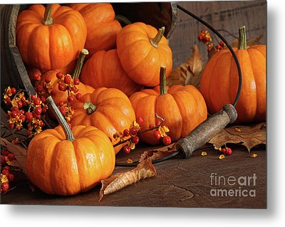 Small Pumpkins With Wood Bucket  Metal Print by Sandra Cunningham