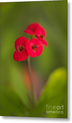 Small Red Flowers With Blurry Background Metal Print