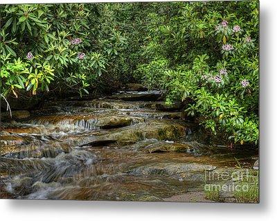 Small Stream In West Virginia With Mountain Laurel Metal Print by Dan Friend