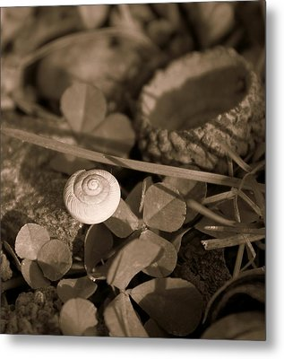 Metal Print featuring the photograph Small Things Matter by Candice Trimble