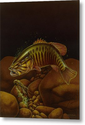 Smallmouth And Crawdad Metal Print