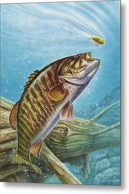 Smallmouth Bass Metal Print by JQ Licensing