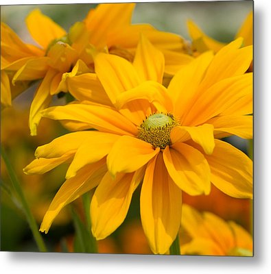 Smile Metal Print by Cathy Donohoue