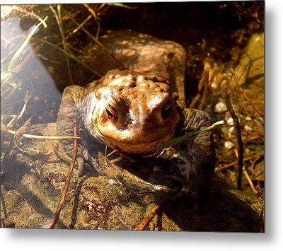 Smile Metal Print by Lucy D