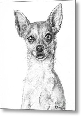 Smiling Chihuahua In Charcoal Metal Print by Kate Sumners