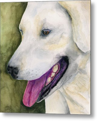 Smiling Lab Metal Print by Stephen Anderson