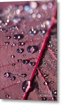 Smoke Bush Droplets Metal Print by Anne Gilbert