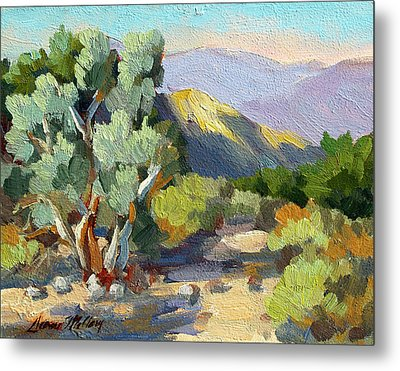 Smoke Trees At Thousand Palms Metal Print by Diane McClary