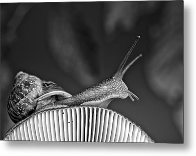 Snail And Mushroom Metal Print by Nailia Schwarz