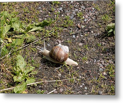 Metal Print featuring the photograph Snail by Leif Sohlman