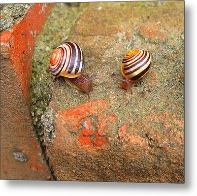 Metal Print featuring the photograph Snail Snail The Gangs All Here by Mary Bedy