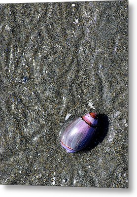 Metal Print featuring the photograph Snail's Pace by Lisa Phillips