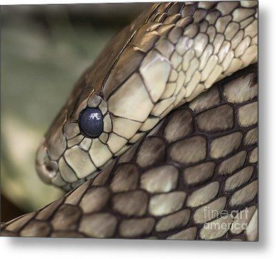 Snake Metal Print by Lucid Mood