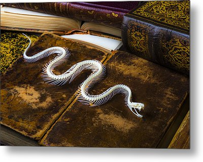Snake Skeleton And Old Books Metal Print by Garry Gay