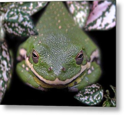 Snakefrog Metal Print by Joseph Tese